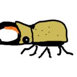 ヒルスシロカブト 飼育記録 その①(幼虫飼育)